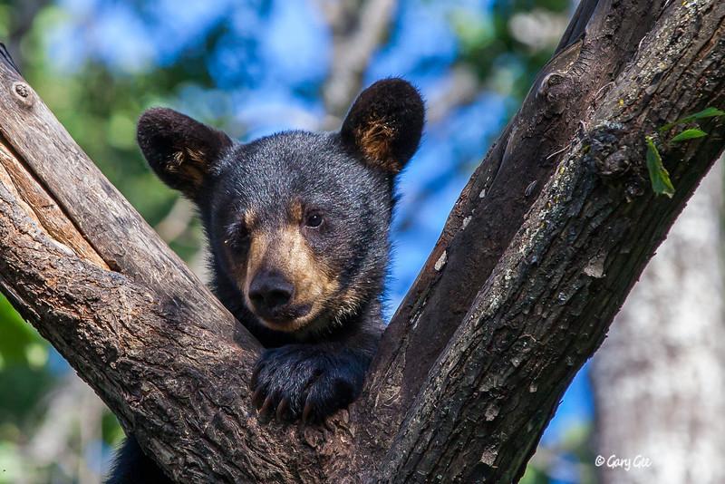 Black Bear_30-1