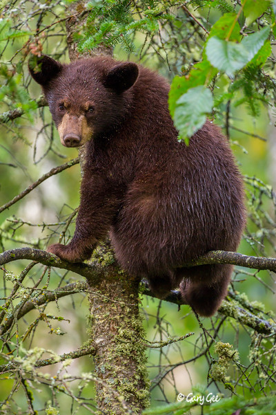 Black Bear_93-1