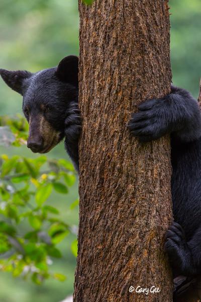 Black Bear_124-1