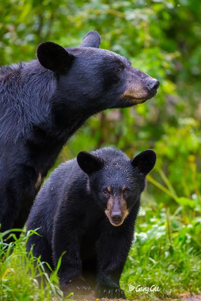 Black Bear_149-1