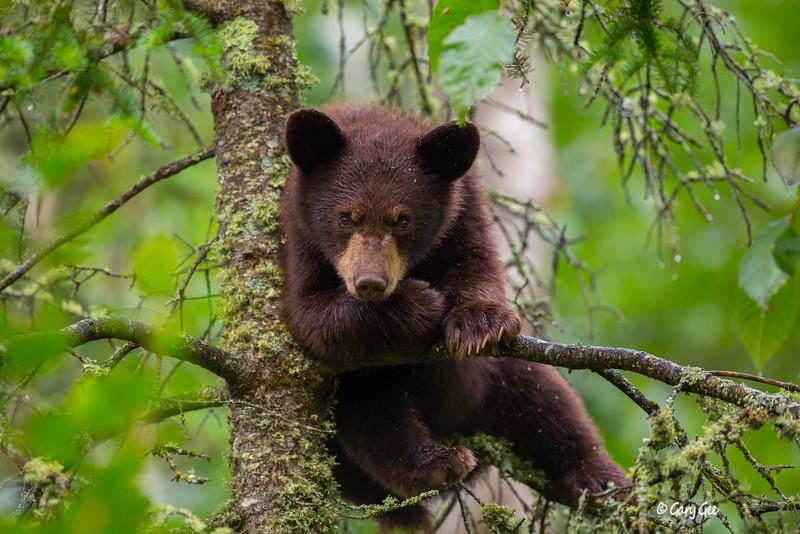 Black Bear_79-1