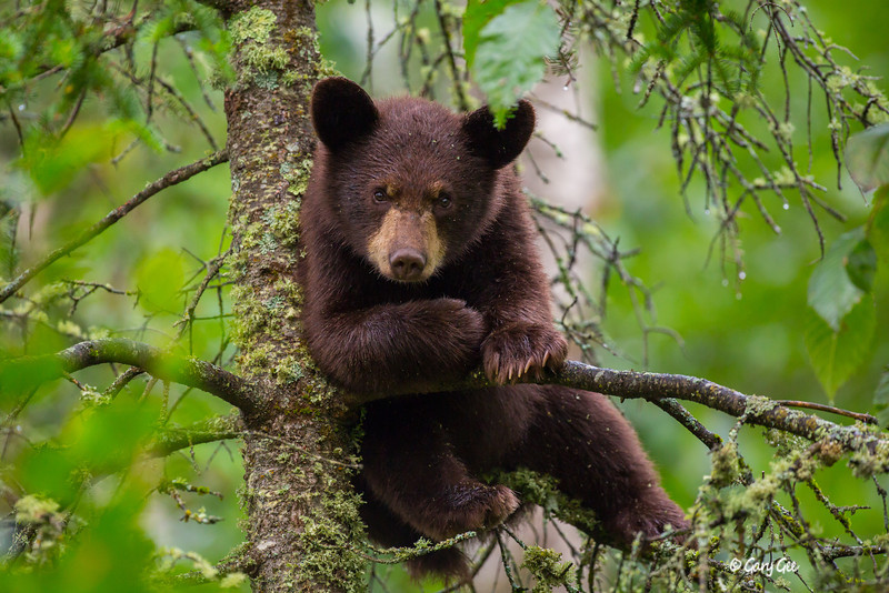 Black Bear_77-1