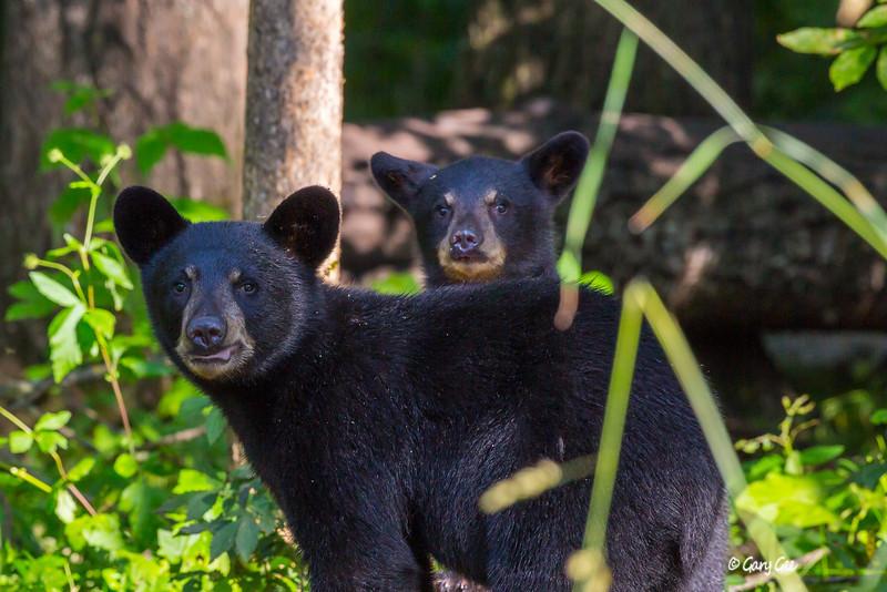 Black Bear_138-1