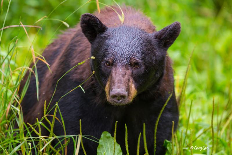 Black Bear_114-1