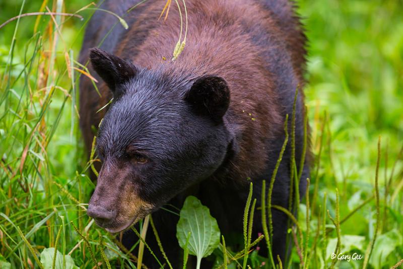 Black Bear_112-1