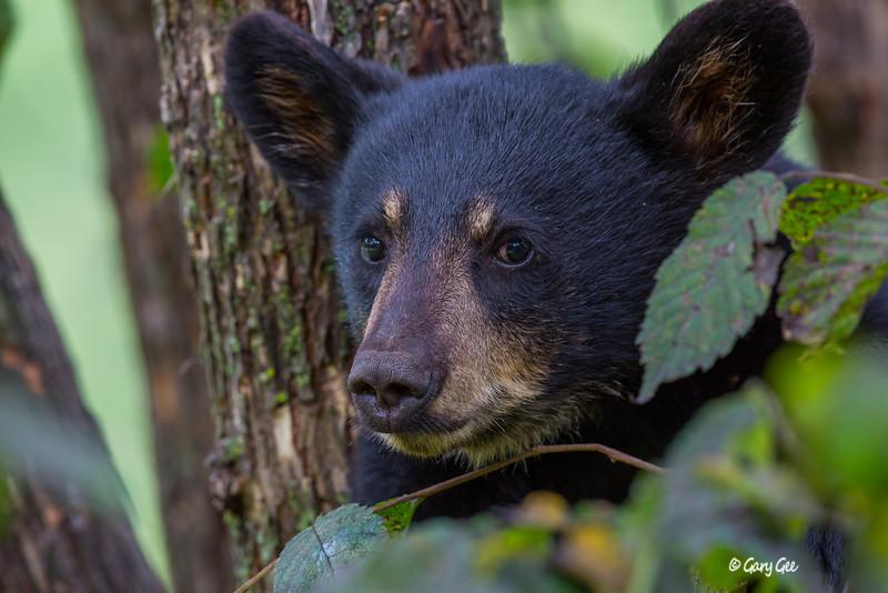 Black Bear_122-1
