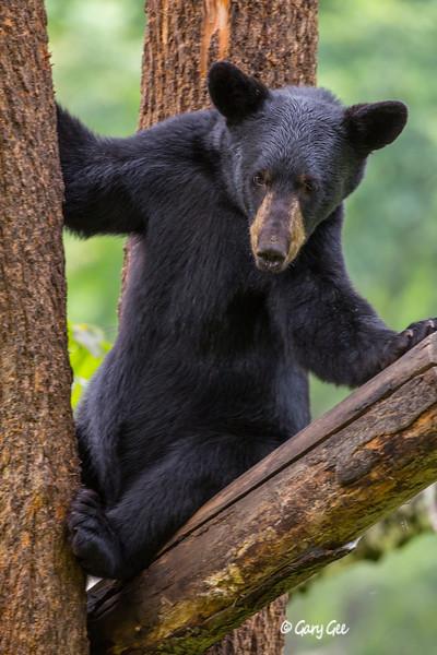 Black Bear_128-1