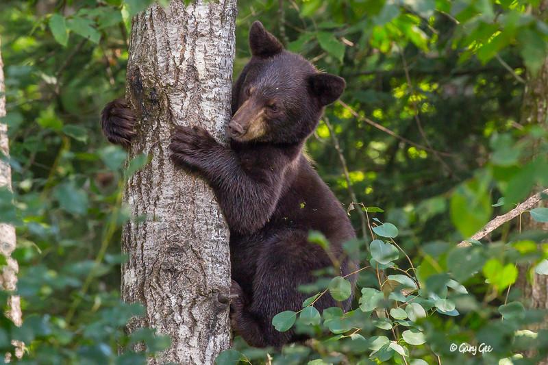 Black Bear_14-1