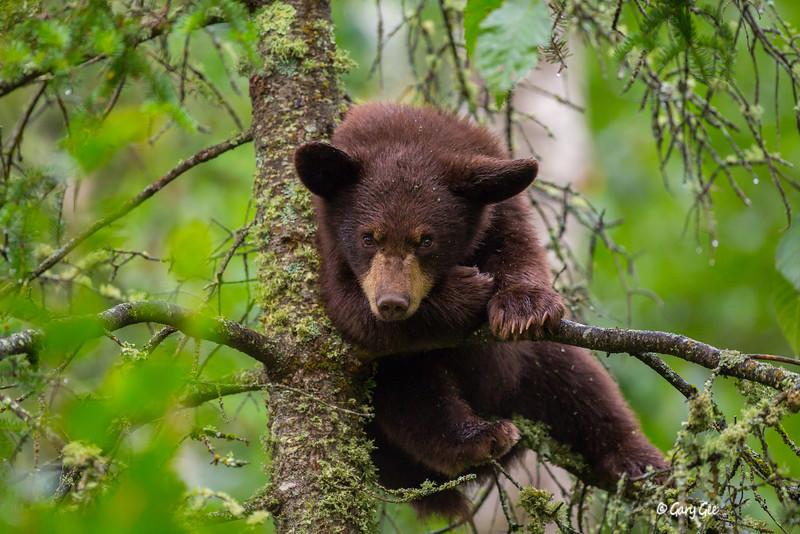 Black Bear_80-1