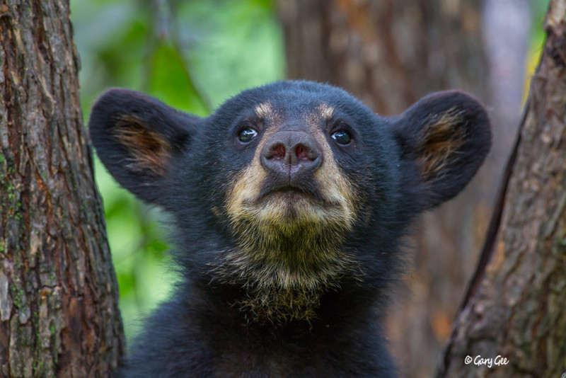 Black Bear_120-1