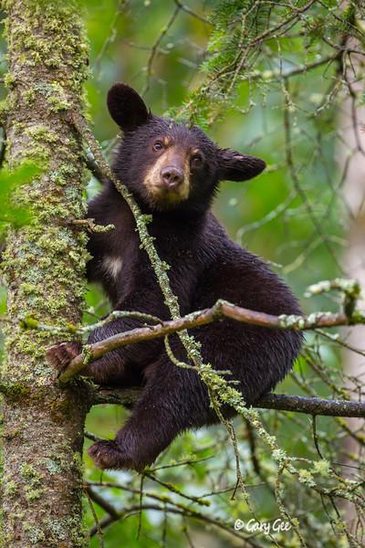 Black Bear_88-1