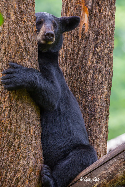 Black Bear_125-1