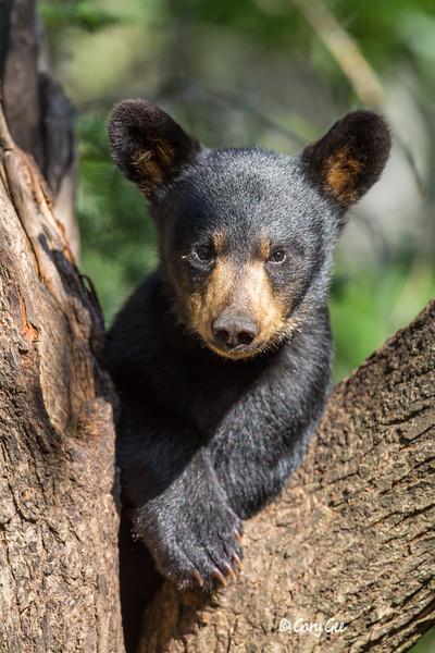 Black Bear_24-1