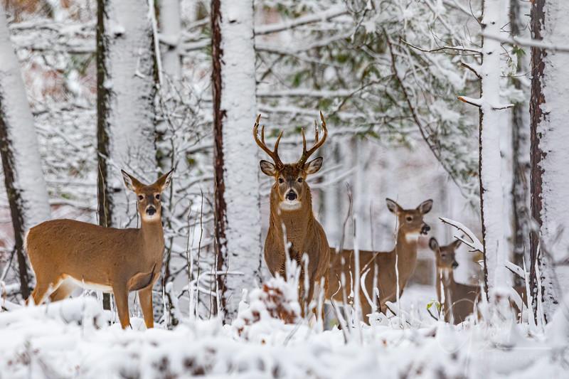 10 Point Whitetail Buck -Nov, 1 2019