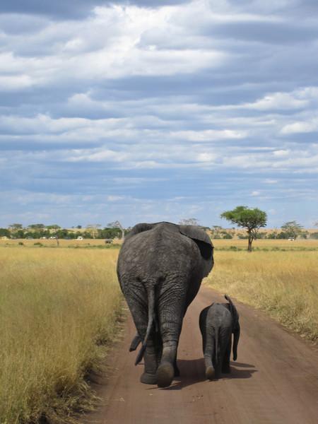 Elephant (31 of 49)