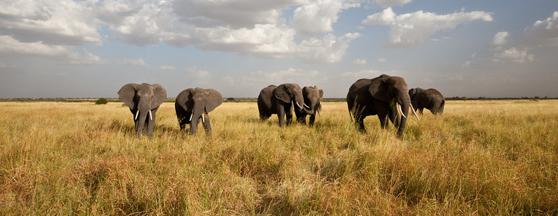Elephant (15 of 49)
