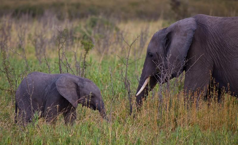 Elephant (22 of 49)