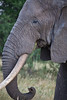 Elephant (29 of 49)