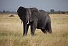 Elephant (2 of 49)