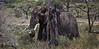 Elephant (43 of 49)
