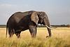 Elephant (14 of 49)