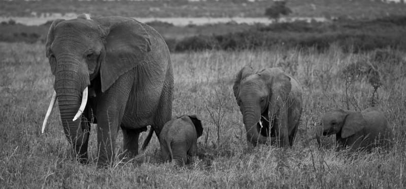 Elephant (20 of 49)