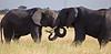 Elephant (6 of 49)