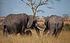 Elephant (35 of 49)
