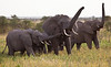 Elephant (25 of 49)