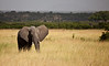 Elephant (8 of 49)