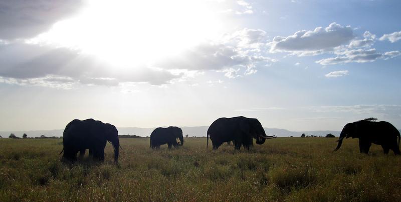 Elephant (1 of 49)