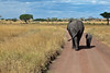 Elephant (39 of 49)