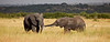 Elephant (5 of 49)