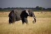 Elephant (4 of 49)