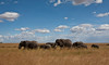 Elephant (36 of 49)