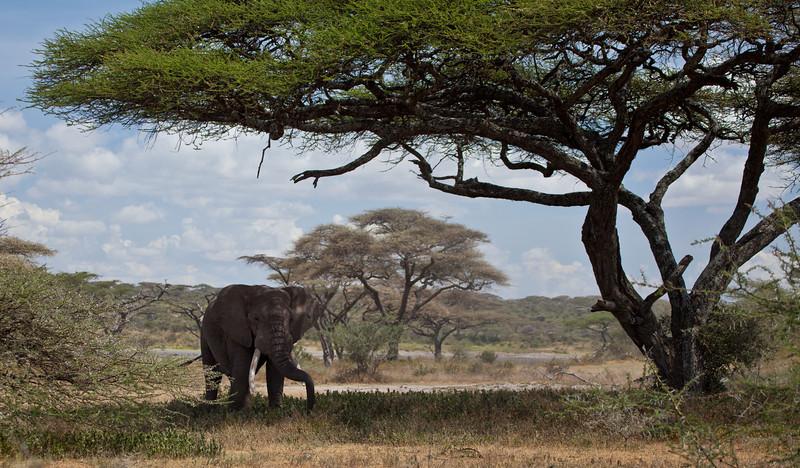 Elephant (42 of 49)