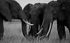 Elephant (9 of 49)