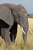 Elephant (11 of 49)