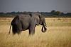 Elephant (3 of 49)