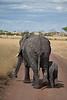 Elephant (38 of 49)