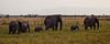 Elephant (27 of 49)