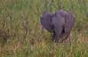 Elephant (21 of 49)