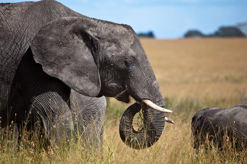 Elephant (34 of 49)