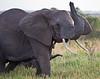 Elephant (24 of 49)