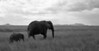 Elephant (37 of 49)