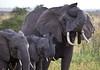 Elephant (26 of 49)