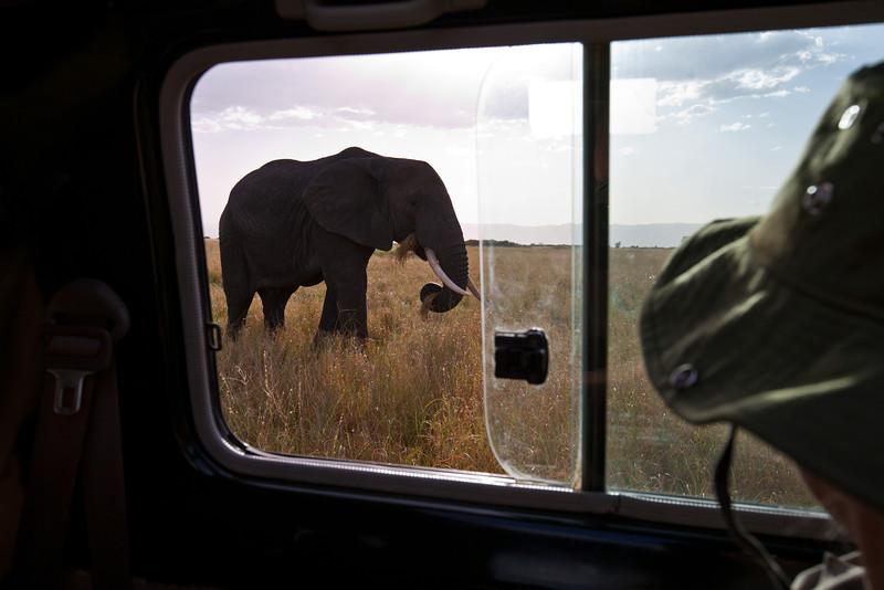 Elephant (18 of 49)