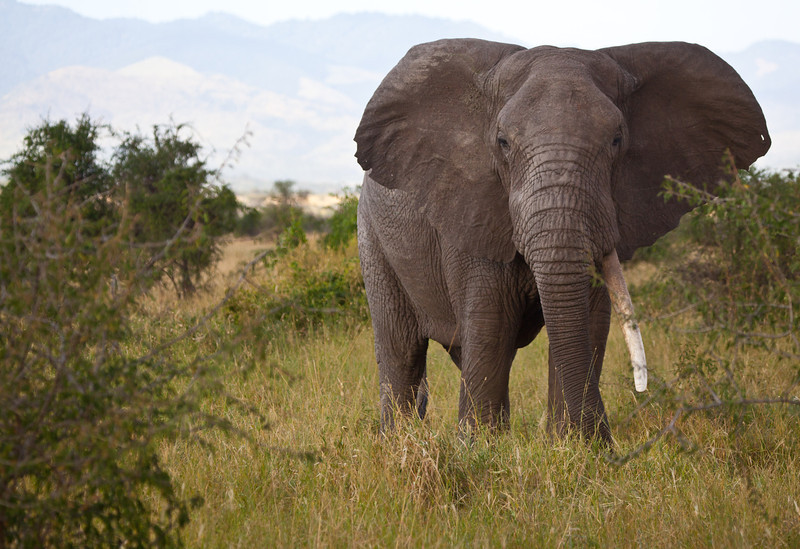 Elephant (28 of 49)