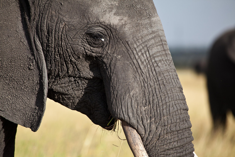 World's Largest Land Mammal