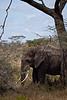 Elephant (44 of 49)